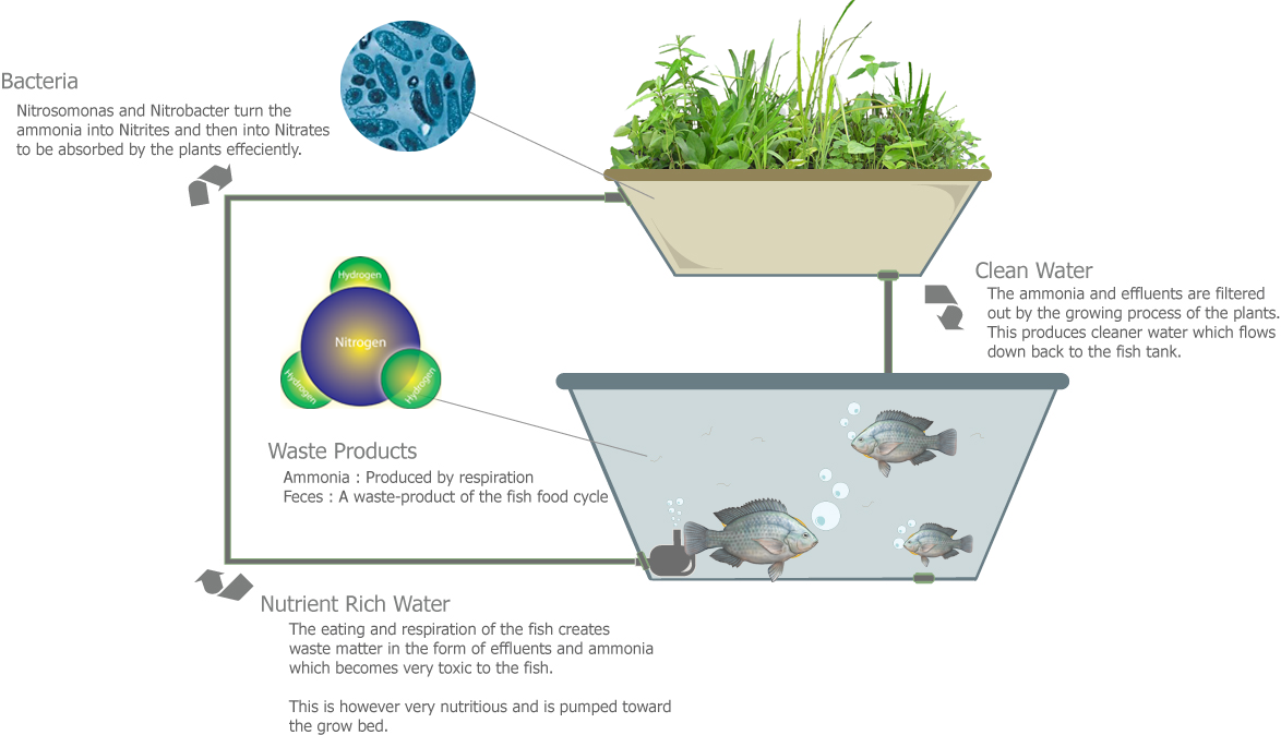 Aquaponics usaquaponics for Nitrogen cycle fish tank